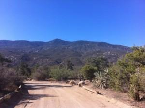 Pinyon Flats Campground View