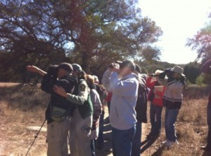 Our group looking at a Red-shoulder Hawk in a tree