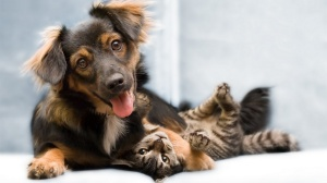 Funny Cat & Dog Friendship_5