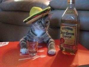 Mexican-cat