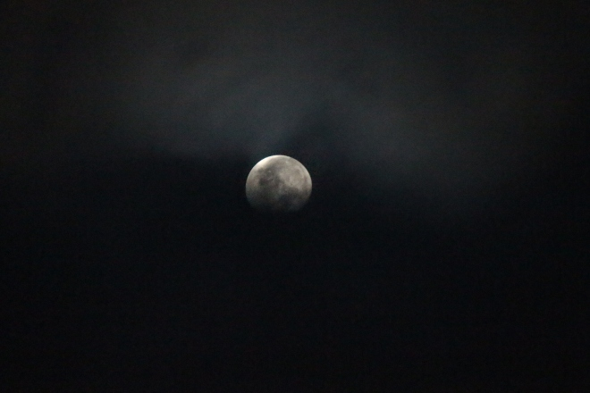 """I saw walking my dog early one morning and this """"Halloween"""" looking moon was out."""