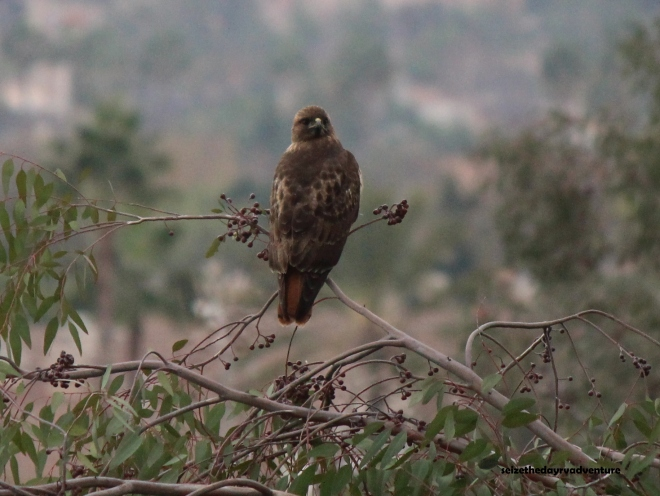 The hawk fully turned its head to see me. It was a incredible experience to see.