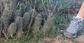 Bonker Hedgehog