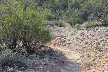 Loma Verde Tailhead