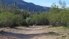 Loma Verde Trailhead