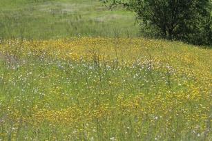 Yellow & White Wildflowers