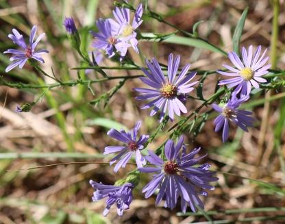 Wildflowers still here