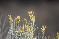 Plant Life at Walnut Canyon NM