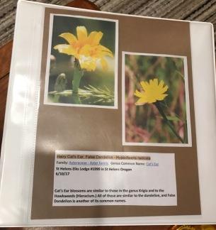 My Wildflower Notebook